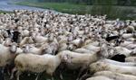 W Rosji pięciu zabitych w kłótni o pastwisko