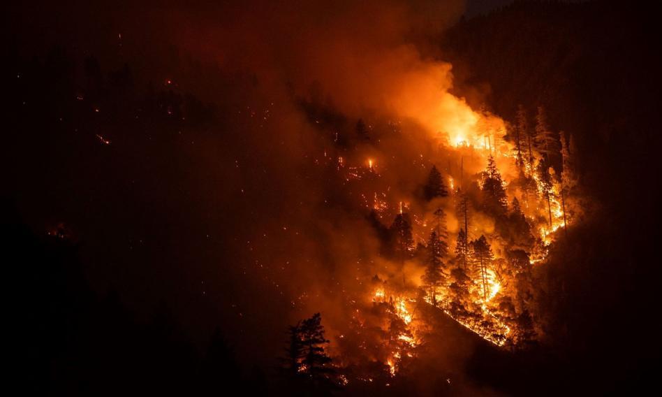 W Bułgarii płoną hektary lasów. Ponad 200 pożarów w ciągu doby