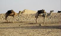 Tunezja: nowy podatek dla turystów