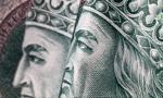 Wyłudznia z tarczy finansowej sięgają milionów złotych