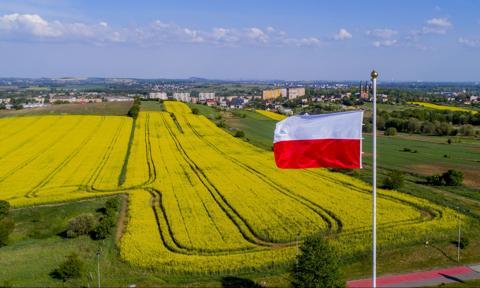 Polska trzecim w UE producentem rzepaku