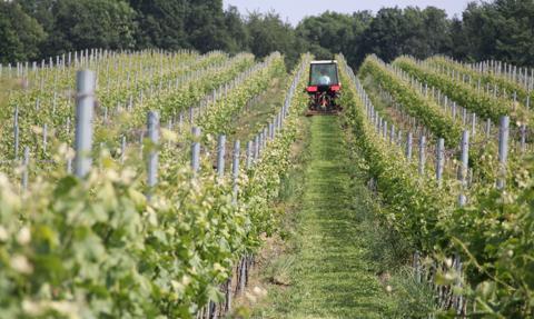 Copa i Cogeca: Spada produkcja wina w Europie