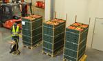 Mniejsze zbiory jabłek, wyższe ceny