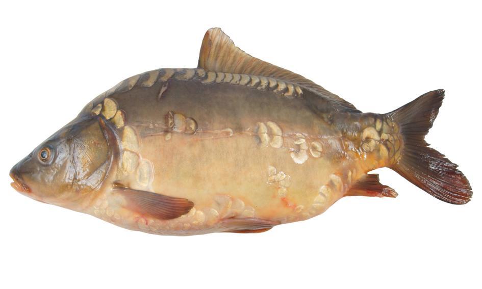 WWF: karp i śledź to jedne z ryb najczęściej goszczących na wigilijnym stole