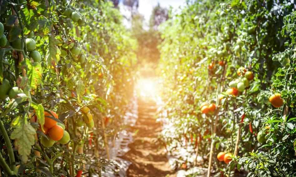 Żywność drożeje, ale rolnicy nie są zadowoleni