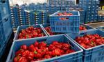 W Rosji zniszczono ponad 500 ton żywności objętej embargiem