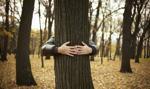 Prezydent za ułatwieniami w wycince drzew i krzewów na własnej posesji
