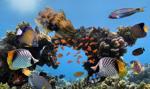 UNESCO: Wielka Rafa Koralowa powinna trafić na listę zagrożonego światowego dziedzictwa