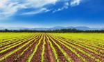 Podlaskie: 14,5 mln zł z UE na scalanie gruntów