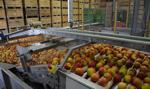 PIE: Polska czołowym eksporterem żywności