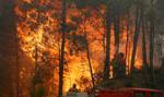 Rekordowa kara za wywołanie pożaru lasu we Włoszech