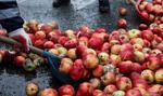 Protest rolników w Warszawie. Rozsypane jabłka i płonące opony