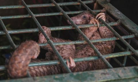 Wietnam zakazuje handlu dzikimi zwierzętami, by ograniczyć ryzyko epidemii
