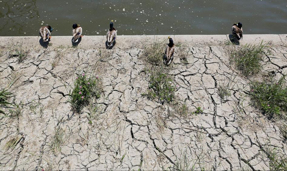 Kurtyka: Potrzebne kompleksowe podejście do problemu suszy