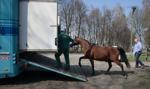 Będzie odrębne śledztwo w sprawie aukcji koni arabskich Pride of Poland