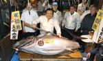 Japonia: 637 tys. dolarów za tuńczyka na słynnej aukcji w Tokio