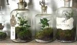 Własny las zamknięty w butelce