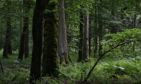 Siarka: Od nowego roku leśnictwo pod nadzorem resortu rolnictwa
