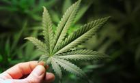 Efekty legalizacji marihuany – spadające ceny