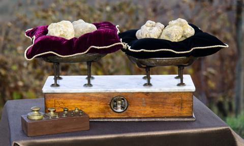 Oto najmniejsza i najdroższa trufla na świecie