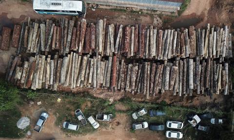 Wylesianie w brazylijskiej Amazonii największe od 12 lat