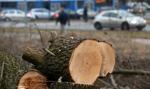 Nowe stawki opłat za wycinkę drzew ikrzewów