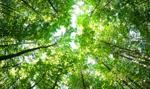 Kraków chce podwoić powierzchnię lasów