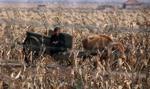 Korea Północna odmawia przyjęcia pomocy żywnościowej z Korei Południowej