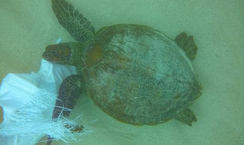Plastik zanieczyszcza Galapagos