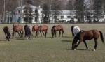Chińczycy chcą kupować polskie konie