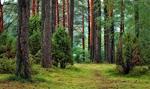 Szwecja: sezonowi pracownicy leśni, w tym z Polski, są wykorzystywani przez pracodawców