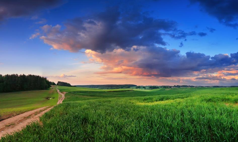 """Wiceminister rolnictwa: Zarzuty o """"zamrożeniu"""" sprzedaży ziemi nie potwierdziły się"""