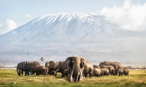 Płoną zbocza Kilimandżaro, setki osób walczą z żywiołem