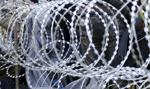 Świńskie głowy na granicy? Tak węgierski europoseł chce straszyć uchodźców