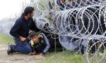 Węgry wzmacniają ogrodzenie na granicy z Serbią