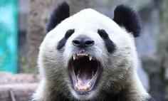 Ryk niedźwiedzia na chińskiej giełdzie. Świat drży