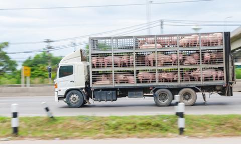 """Nieoficjalna """"piątka dla zwierząt"""". Ustawy nie ma, ale rząd realizuje niektóre postulaty"""