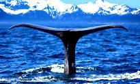 Whaling, czyli phishing i grube ryby