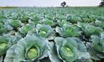 Ruszyły nabory wniosków w sprawie m.in. premii dla młodych rolników