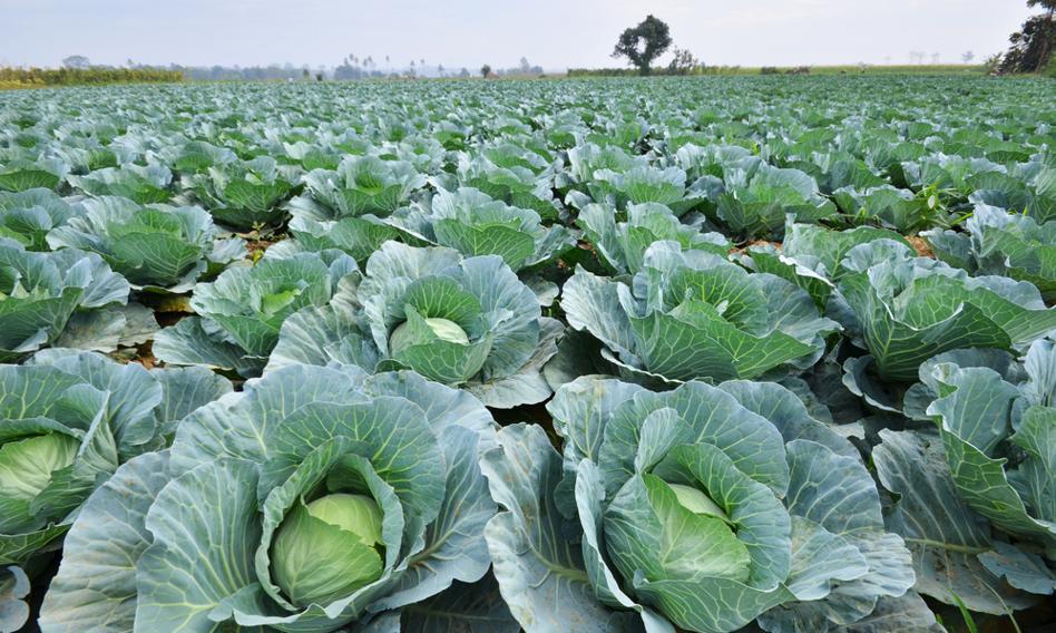 """Organizacje rolnicze domagają się od KE oceny skutków strategii """"od pola do stołu"""""""