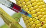 Trybunał UE uznaje organizmy wyhodowane w nowatorski sposób za GMO