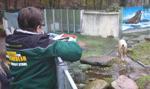 Niemieckie zoo nie wyklucza uboju zwierząt w powodu pandemii