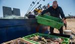 Mit o zanieczyszczonej rybie z Bałtyku dużym problemem dla polskich rybaków
