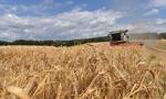 FAO: światowe ceny żywności spadły do najniższego poziomu od dwóch lat