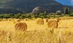 Mniejsze plony warzyw w UE z powodu suszy