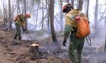 Fala upałów na Syberii uwalnia duże ilości metanu, co może pogorszyć klimat Ziemi
