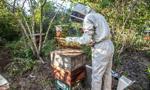 Nowy trend w pszczelarstwie – oddychanie powietrzem z ula