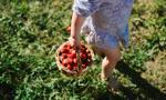 Nieuczciwe firmy pożyczkowe polują na rolników