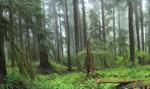 MŚ: na koniec br. Lasy Państwowe mogą niemal podwoić swój zysk