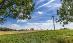 Badanie: farmy wiatrowe nie szkodzą pszczołom